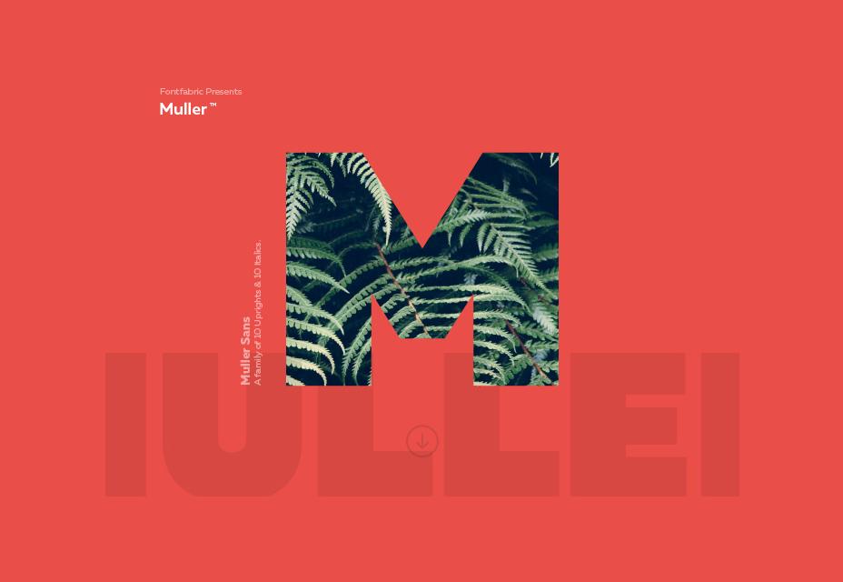 Fuente Muller