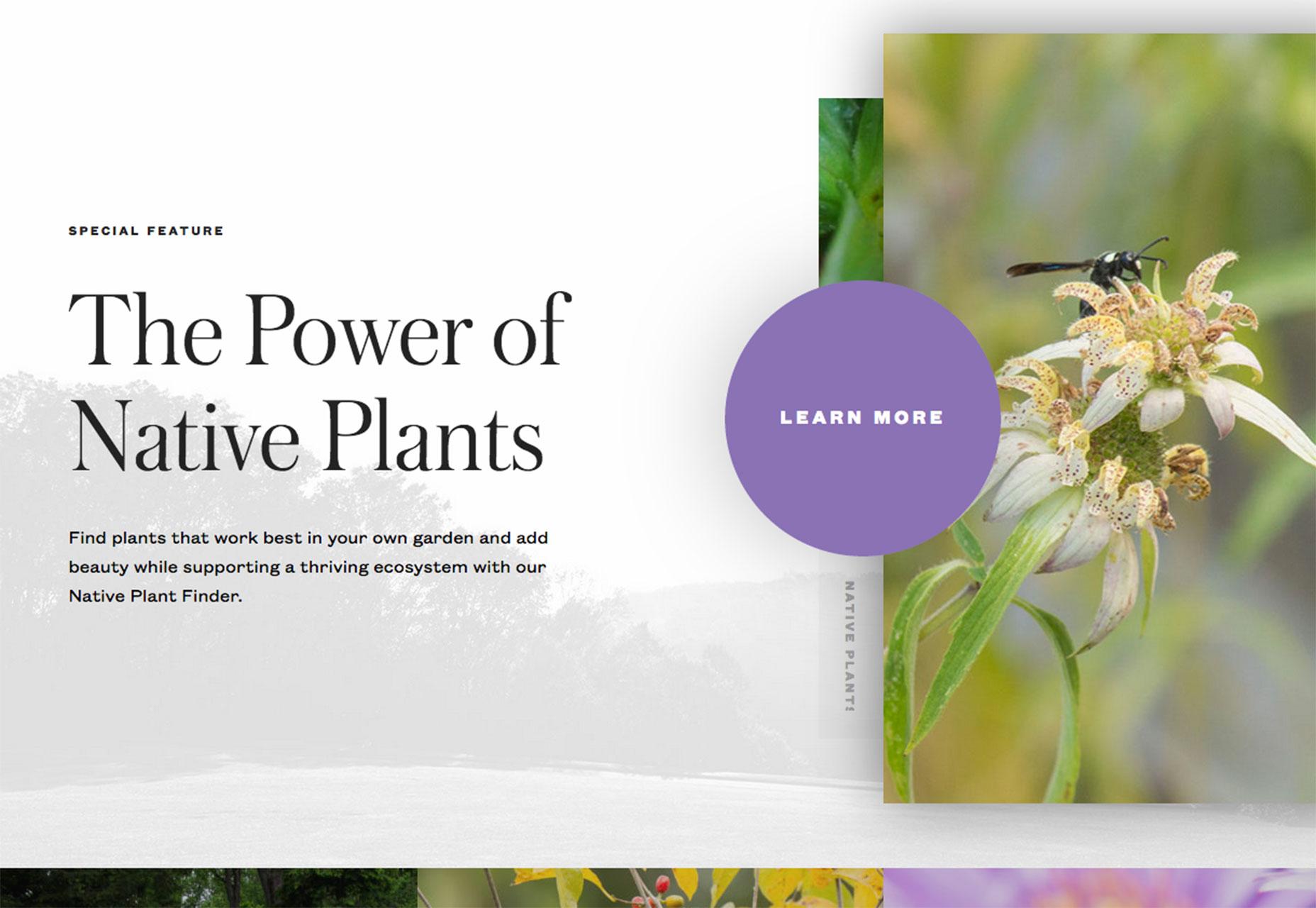 rostlin