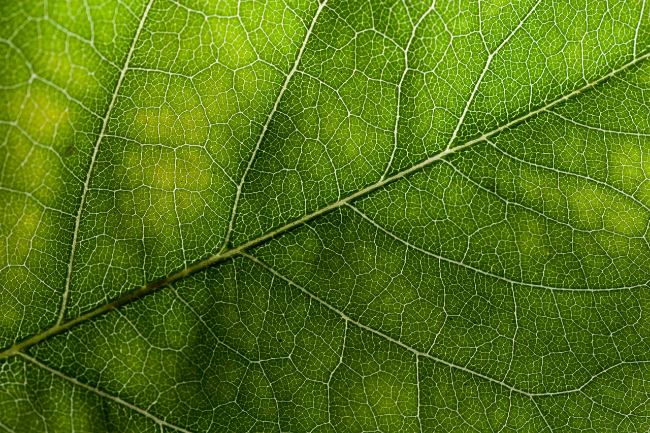 wildtextures-green-leaf-original-file