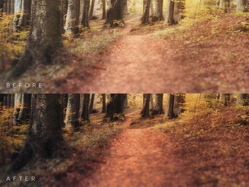 Autumn Actions