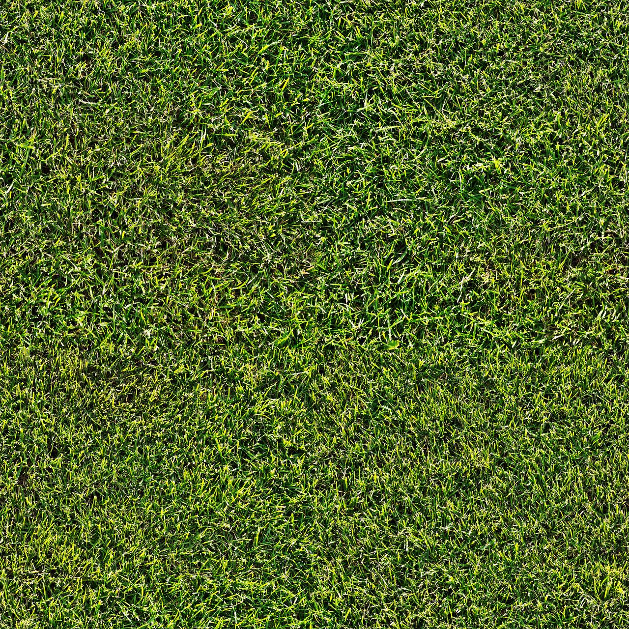 wildtextures_short-grass-field-seamless-texture