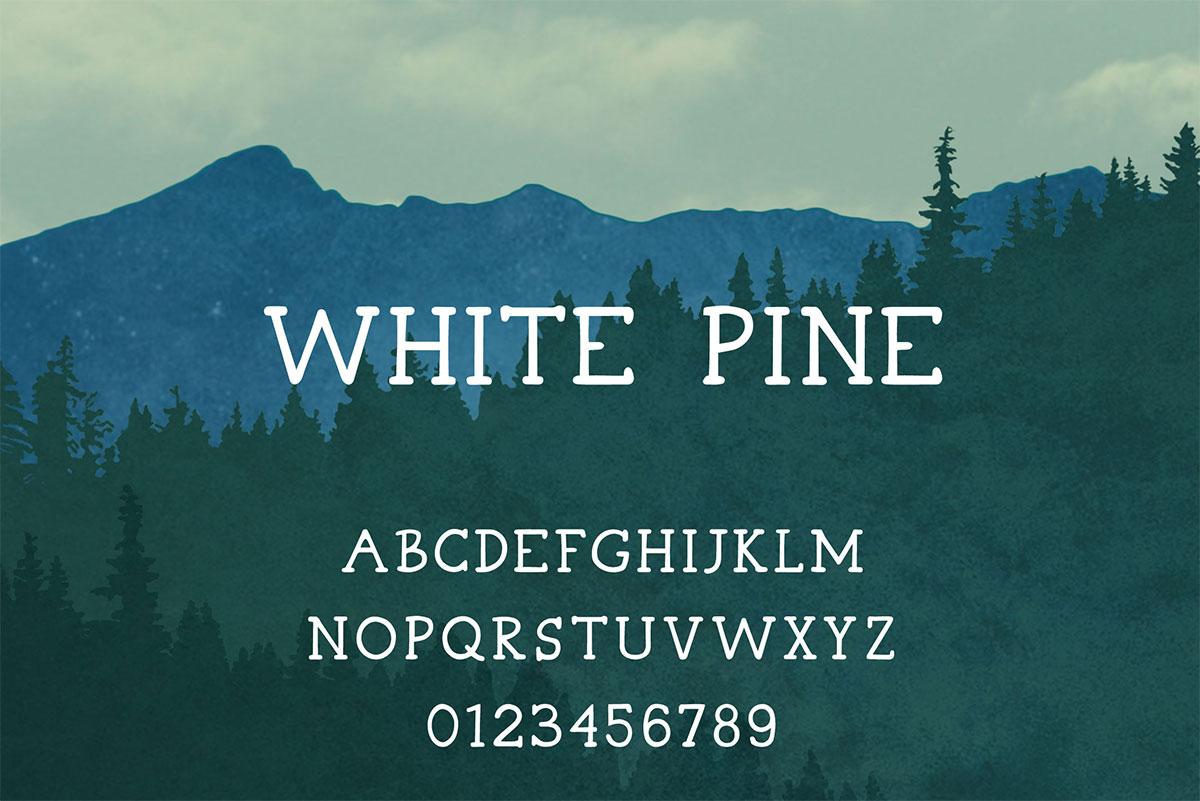 Bílá borovice